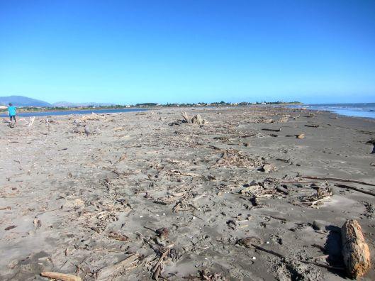 WaikanaeBeach driftwood