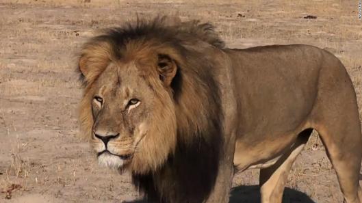 cecil-the-lion-2-super