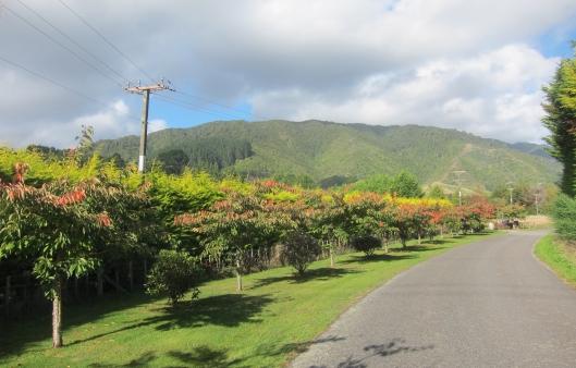 Waikanae Terrace Rd