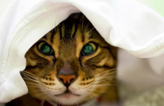 cat-cold