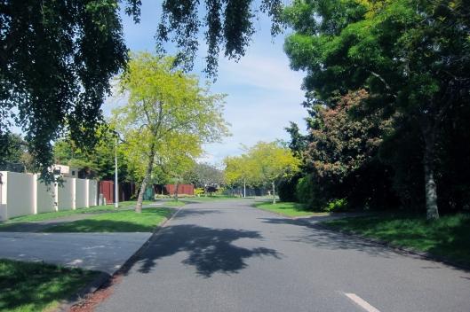 horopito-street