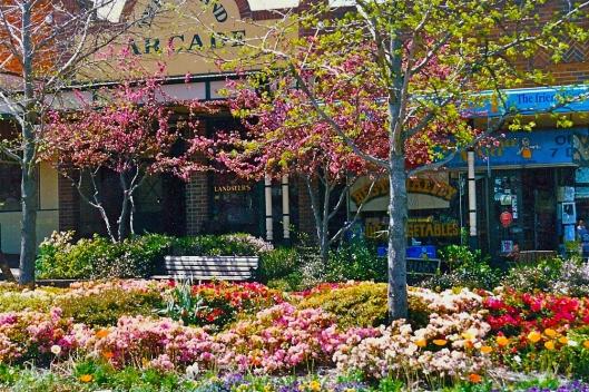 leura-mall-in-springtime-blue-mountains11