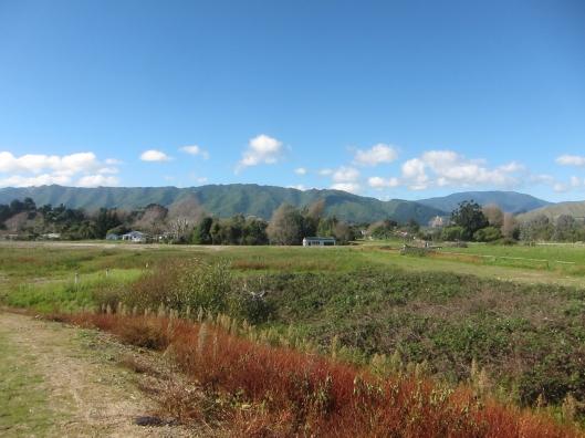 Te Moana open area
