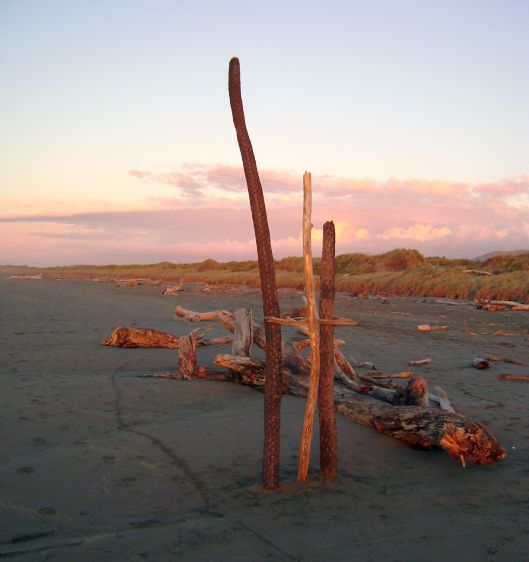 Waikanae Beach driftwood