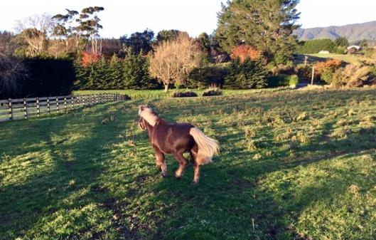 Reikorangi horse
