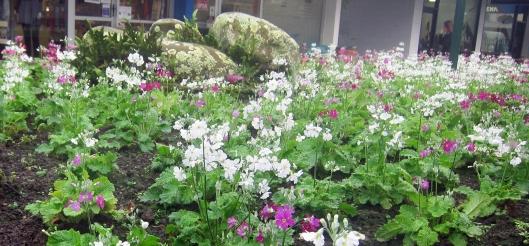 Mahara Flower Bed