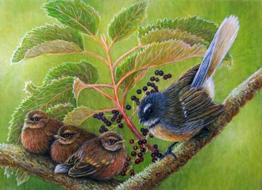 Cushla-Fantail-chicks-2-768x557