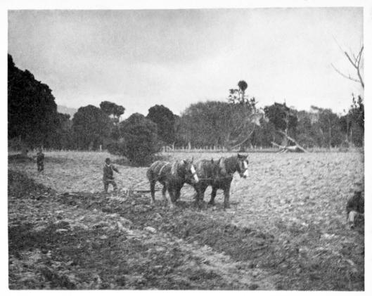 Ploughing Kiatawa maybe Waikanae 1908 HJ Hislop