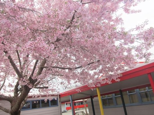Kapanui blossom