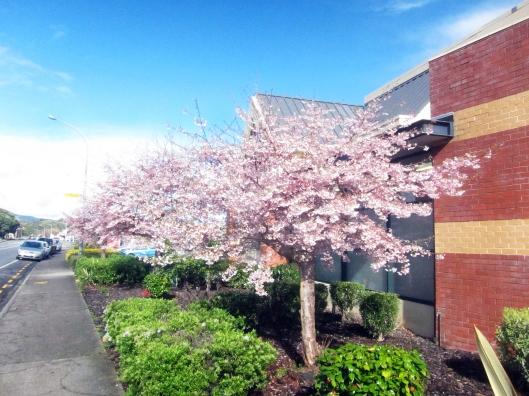 New World blossom