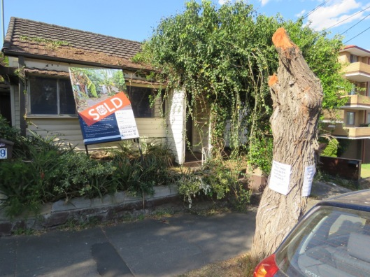 tree-vandalism-marrickville-photo-by-saving-our-trees