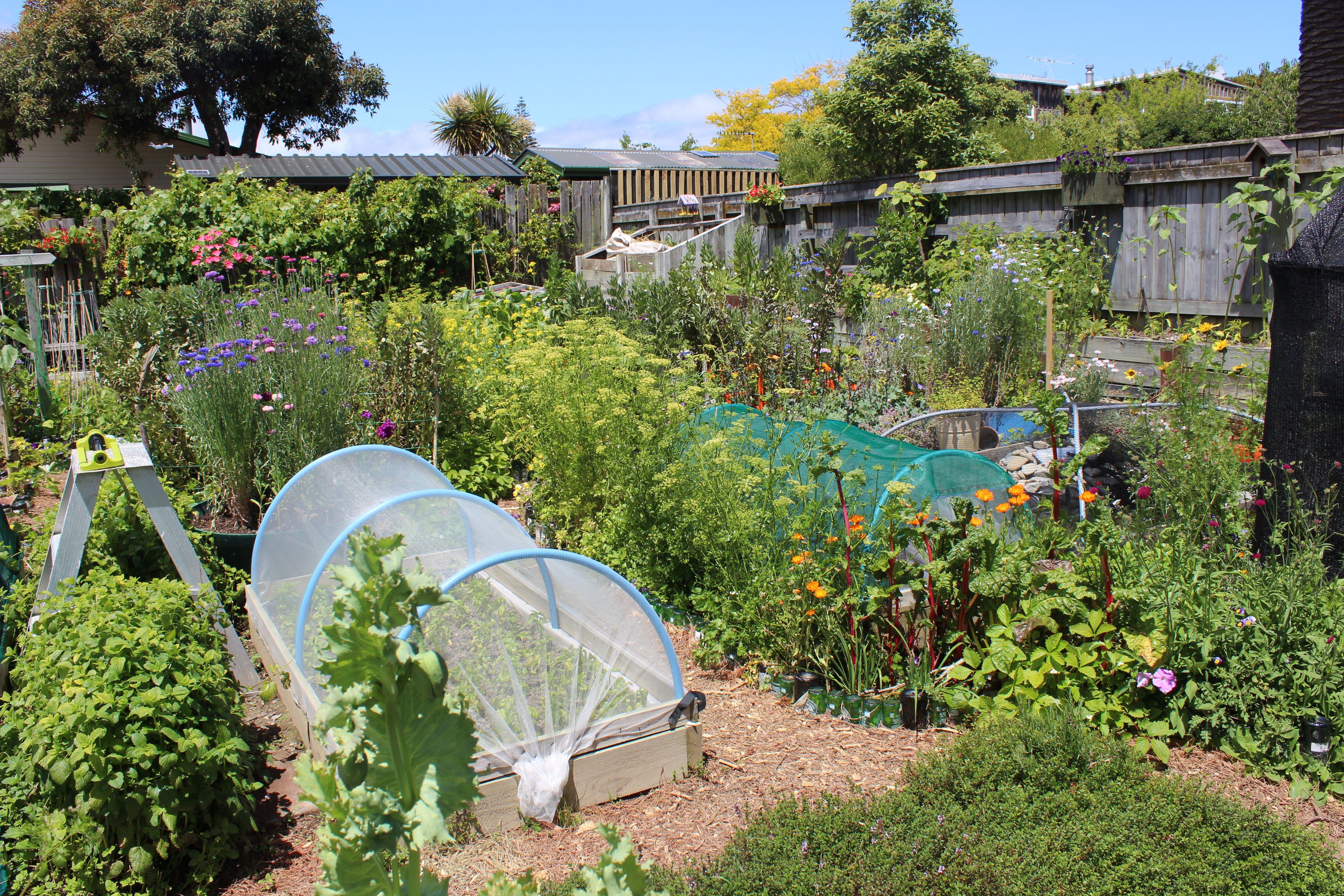 more photos of the Long Beach café organic garden | Waikanae Watch