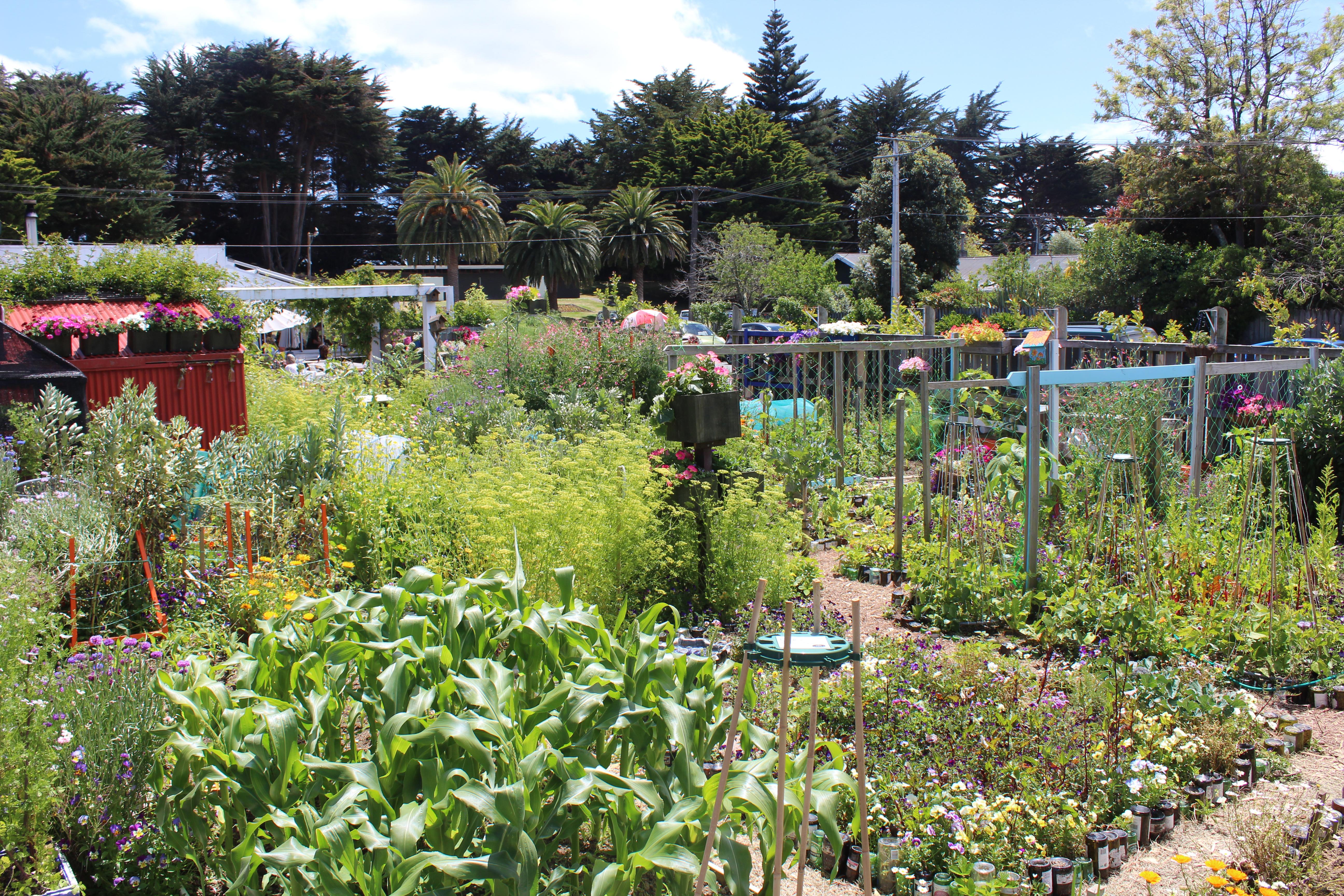 on the weekend Waikanae spring garden trail | Waikanae Watch