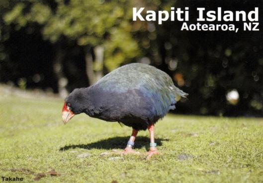 Takahe on Kapiti Island