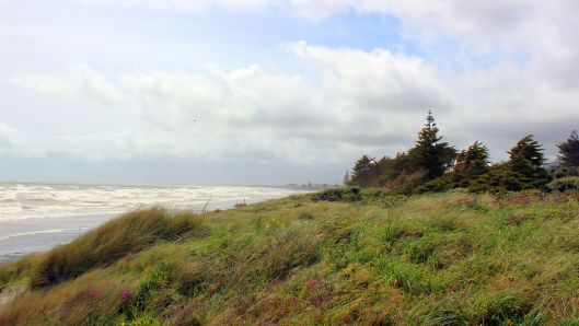 Waikanae Beach looking North