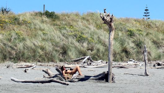 Waiky Beach Driftwood Scultptures
