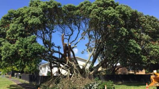 vandalism of tree