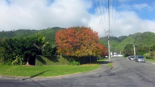 Ruru Street autumn
