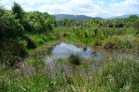 Waiky scientific reserve