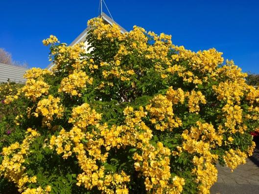FLowers of Autumn Gold.jpg