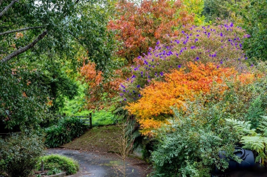 Reikorangi garden
