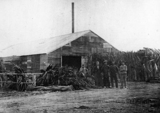 Waikanae Browns Flaxmill 1910