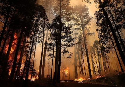 forest-fire-trees
