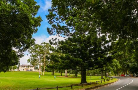 Parramatta trees