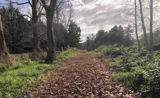 Waikany winter path