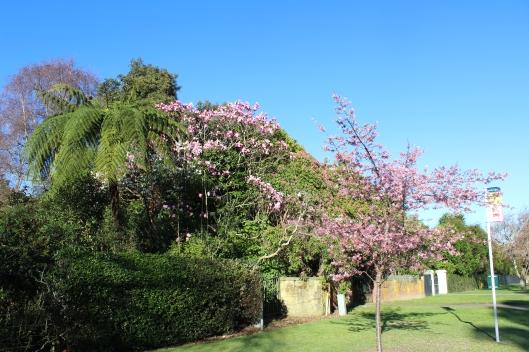 Waikanae early spring blossom