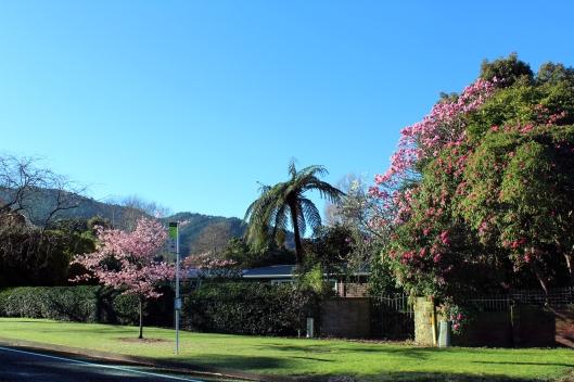 Waikanae Te Moana blossom