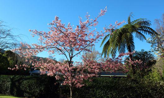 Waikanae TMR blossom