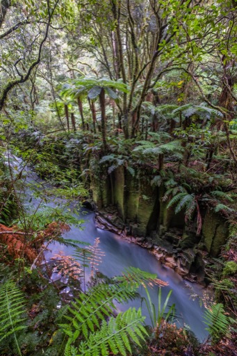 whirinaki-forest-gorge-flowing-water