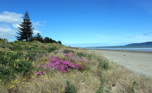 Waikanae Beach wildflowers