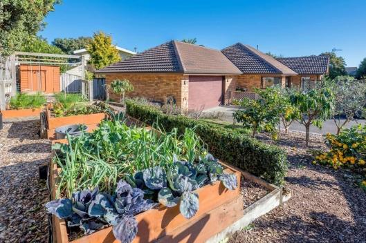Waikanae vege garden
