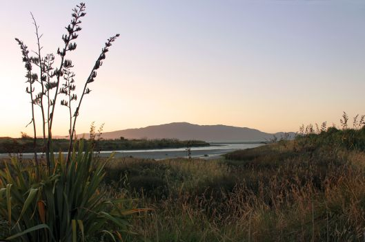 Waikanae Estuary area