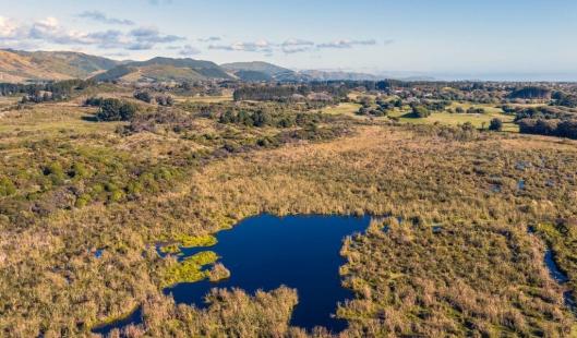 Waikanae Wetlands