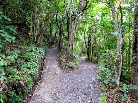 Kapiti Island walk KW