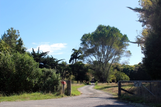 Waikanae private drive