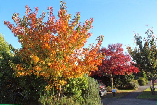 Awanui autumn