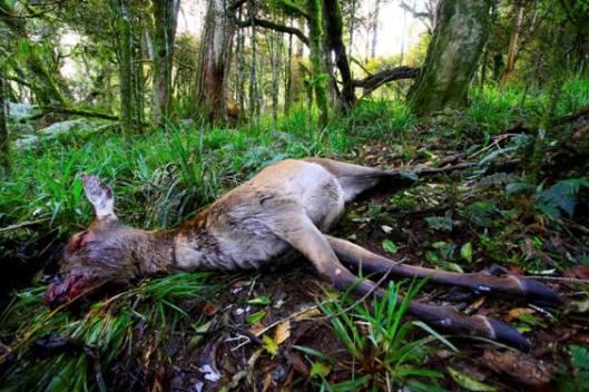 Deer fawn death