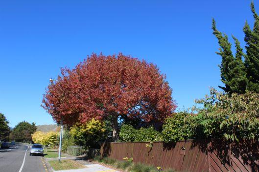 Park Ave autumn