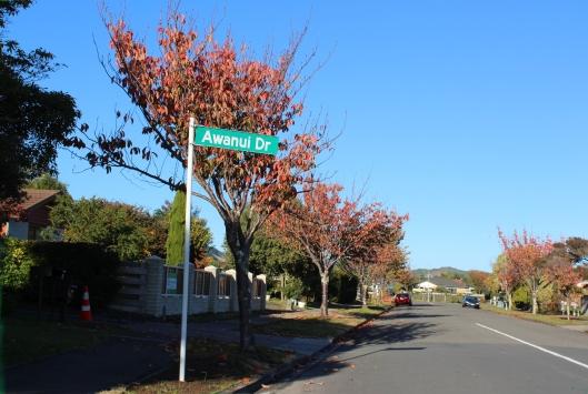 david-street-autumn