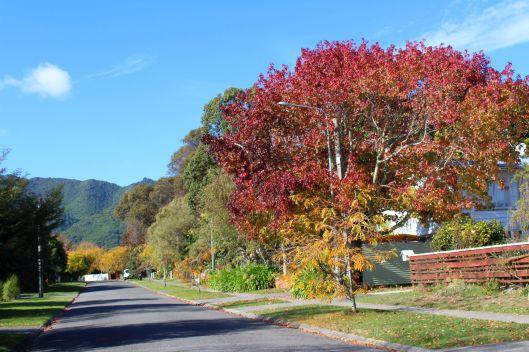 Horopito autumn 1 - Copy