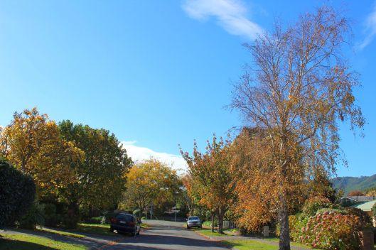 Horopito autumn 2 - Copy