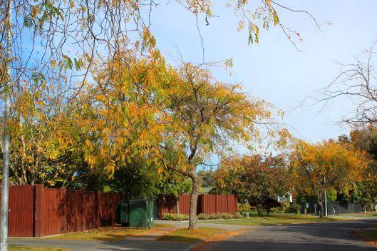 Horopito autumn 3 - Copy