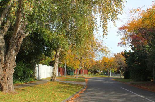 Horopito autumn 4