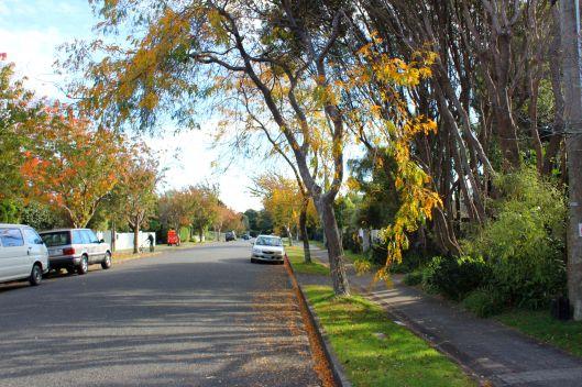 Kohekohe autumn