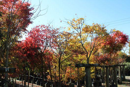 Leafland autumn