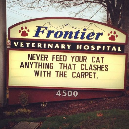 funny-cat-veterinary-clinic-signs-1-5d19ec1cb82d1__700